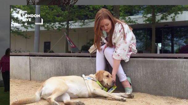 An image form the feature of me stroking Unity (my guide dog)