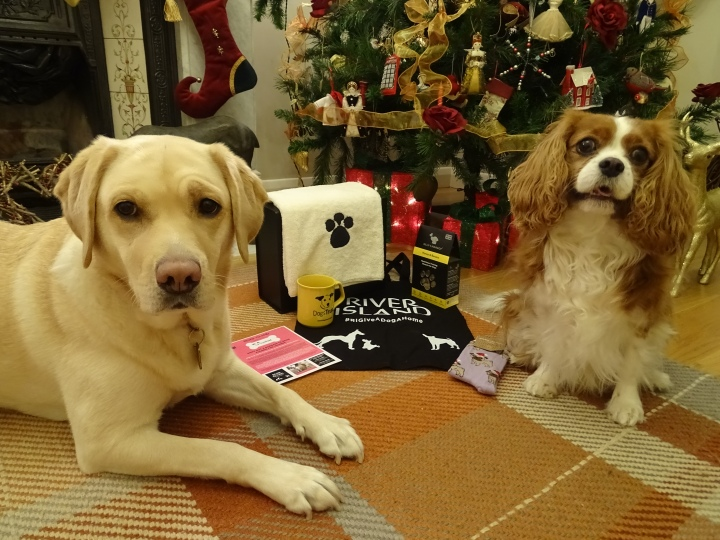 Dogs Trust Team Up With River Island For The #RIGiveADogAHome Campaign