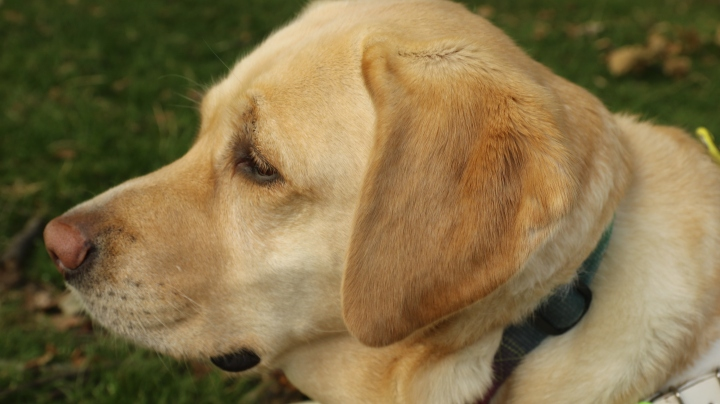 Treating My Guide Dog with PetShop.co.uk *